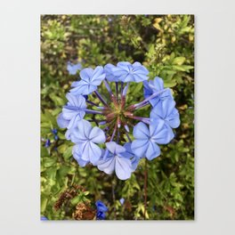 Trust the Process: Flower Ring Canvas Print