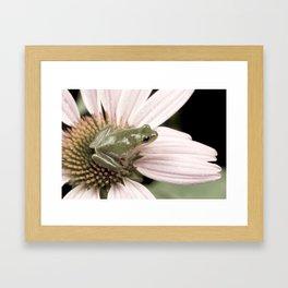 Treefrog on flower Framed Art Print