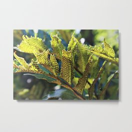 Summer invasion on leafs Metal Print