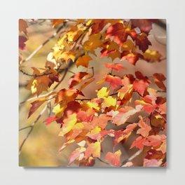Fall Day Metal Print