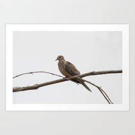 Lonesome Dove Art Print