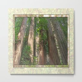 STOUT GROVE REDWOODS 4 LOOKING UP INTO THE TREES Metal Print