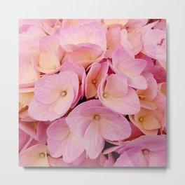 Hydrangea Macro Peach Pink Metal Print