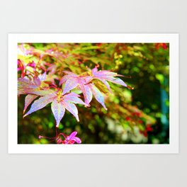 Maroon Leaves - Japanese Maple Art Print