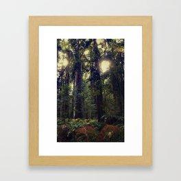 Sunrays in the Redwoods Framed Art Print