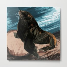 South American fur seal Metal Print