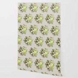 Echeveria Wallpaper