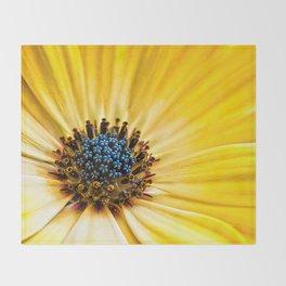 Osteospermum-'Buttermilk' Throw Blanket