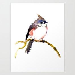 Cute Little Bird, Titmouse Art Print