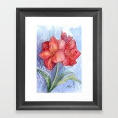 Red Amaryllis Framed Art Print