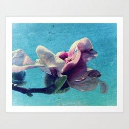 Tulip Tree Blossom #1 Art Print