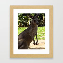 Hanging with the Roos. Framed Art Print