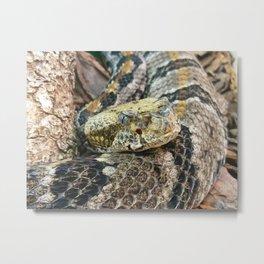 Timber Rattlesnake Close Up Metal Print