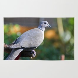 Eurasian Collared Dove Rug