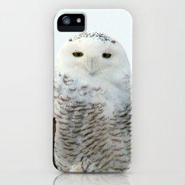 Snowy in the Wind (Snowy Owl 2) iPhone Case