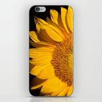 sunflower iPhone & iPod Skins featuring sunflower by mark ashkenazi