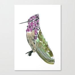 Hummingbird Cassius Canvas Print