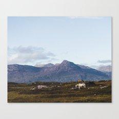 Connemara  - Horse and Mountains Canvas Print