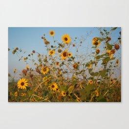 Goodmorning Sunflowers Canvas Print