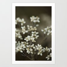 little white flowers. Art Print