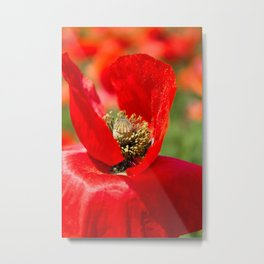 Anatomy of a Poppy: Bed of Petals Metal Print