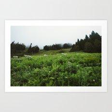 Foggy Mountain Meadow Art Print