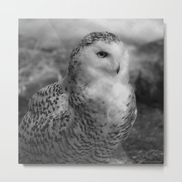 Snowy Owl - Black & White Metal Print