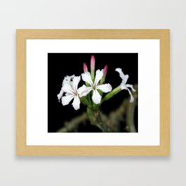 CACTUS FLOWERS Framed Art Print