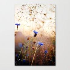 Sleeping Bumblebee Canvas Print