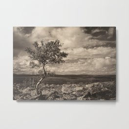 One tree in the mountains Metal Print