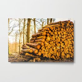 Poltery Site (Wood Storage Area) After Storm Victoria Möhne Forest 3 bright Metal Print