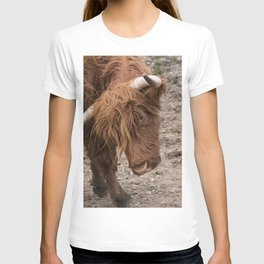 Orange Scottish highland Coo T-shirt