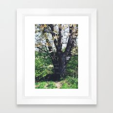 Tree House Framed Art Print