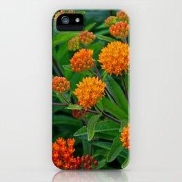Fiery Fervor iPhone Case