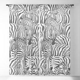Zebras Sheer Curtain