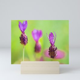 Lavender Bud Painting Mini Art Print