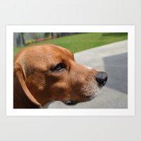beagle Art Prints featuring beagle by Tiffany Davis Kornacki