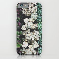 Succulent (4) Slim Case iPhone 6s