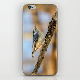 White breasted Nuthatch iPhone Skin