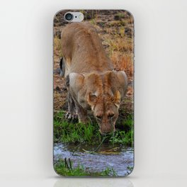 Lioness At The Waterhole iPhone Skin