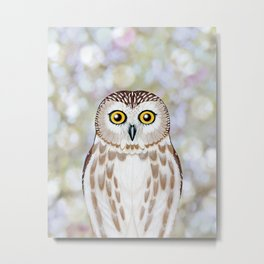 Northern saw whet owl woodland animal portrait Metal Print