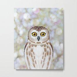 Northern saw whet owl woodland animal portrait Metal Print