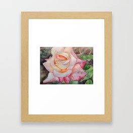 Celebrate Rose Framed Art Print