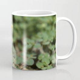 Pika Coffee Mug