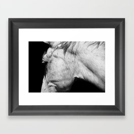 Casper | Animals | Horse Photography | black-white | nature Framed Art Print