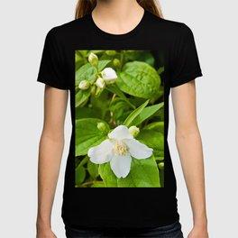 Wild Sicilian Jasmine T-shirt
