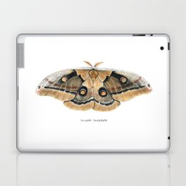 Oculea Silkmoth (Antheraea oculea) Laptop & iPad Skin