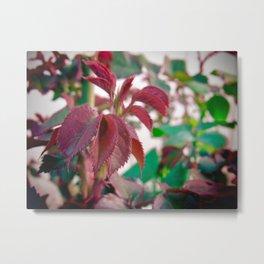 New Foliage Metal Print