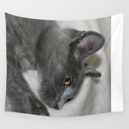 Close Up Portrait Of A Relaxed Grey Cat  Wall Tapestry