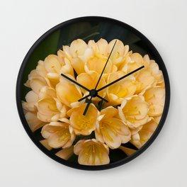 Clivia Apricot Wall Clock